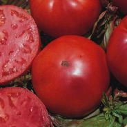 Tomato Marmande VR - Appx 200 seeds